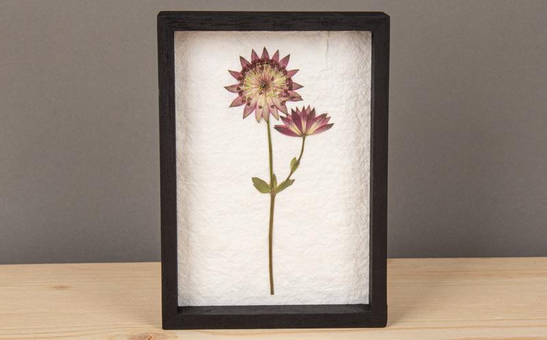 Gepresste Blumen im Rahmen